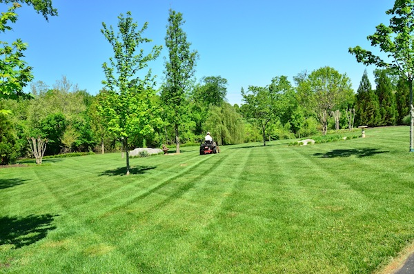 5 Best Riding Lawn Mowers of 2019 (with reviews) | The Wise Handyman